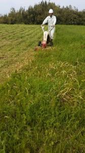 草刈り(吉本)1